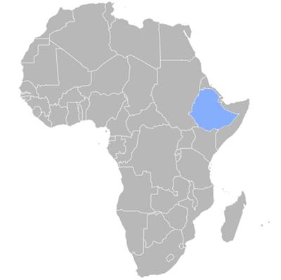 Amharic Translation Company