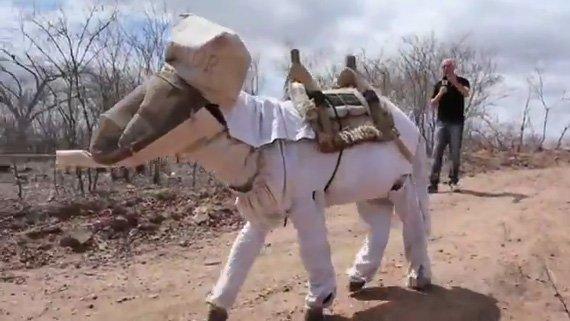 beekeeping-donkey