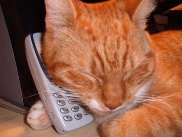 cat-talking-on-phone.jpg