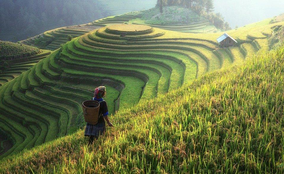 china-rice-paddies