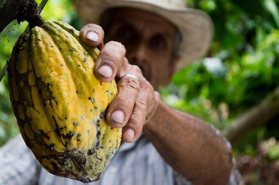 cocoa-colombia