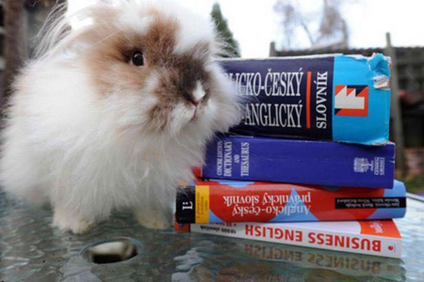Rabbit interpreter
