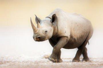 rhino-endangered-species.jpg
