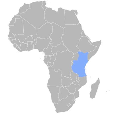 swahili translation company