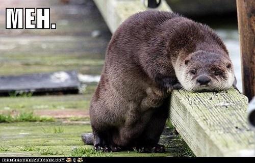Otter translation of neoloism meh